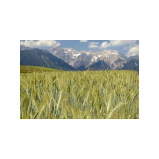 Alpenroggenmehl ® * 2,5 kg